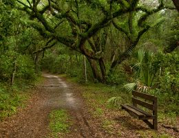 Hiking Trails in Tampa