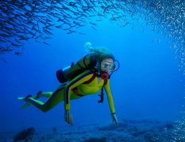 Types of Underwater Diving